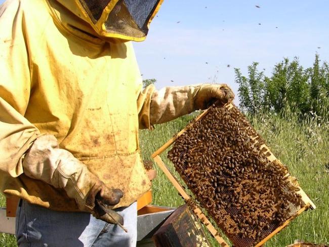 apicoltura-fonte-fico