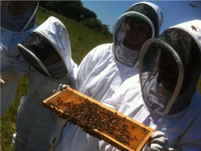 apicoltura-formazione-api-by-matteo-giusti-agronotizie-jpg