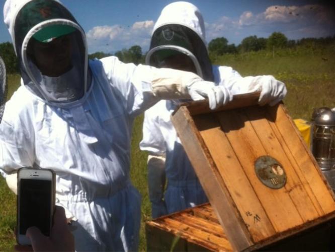 apicoltura-ricreca-apiario-by-matteo-giusti-agronotizie-jpg.jpg