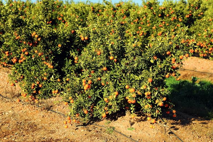 Microirrigazione: l'evoluzione goccia dopo goccia
