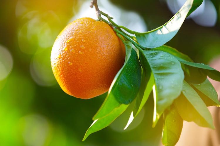 arancia-agrumi-by-jm4t1c-fotolia-750