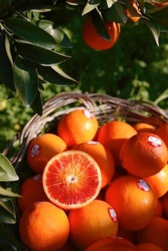 arancia-rossa-di-sicilia-igp