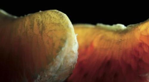 arancia-rossa-igp