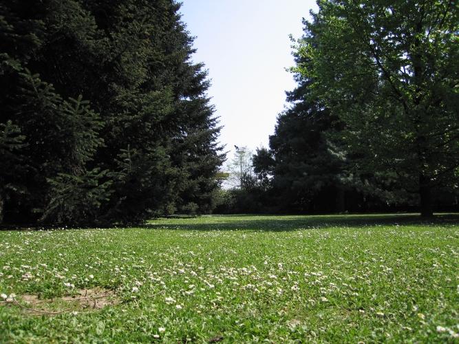 area-verde-alberi-prato-buona-pratica-IMG_8658