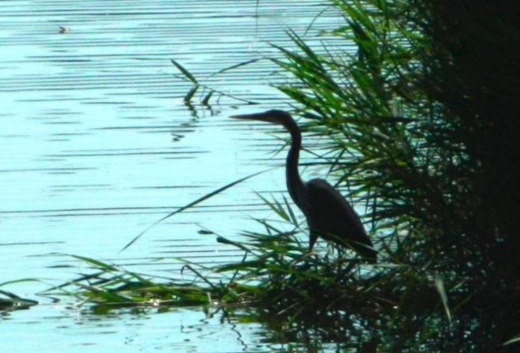 aree-natura-2000-biodiverisita-by-gianluca-bedini-jpg