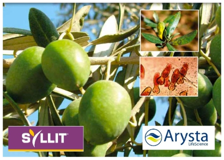 arysta-syllit-olivo.jpg