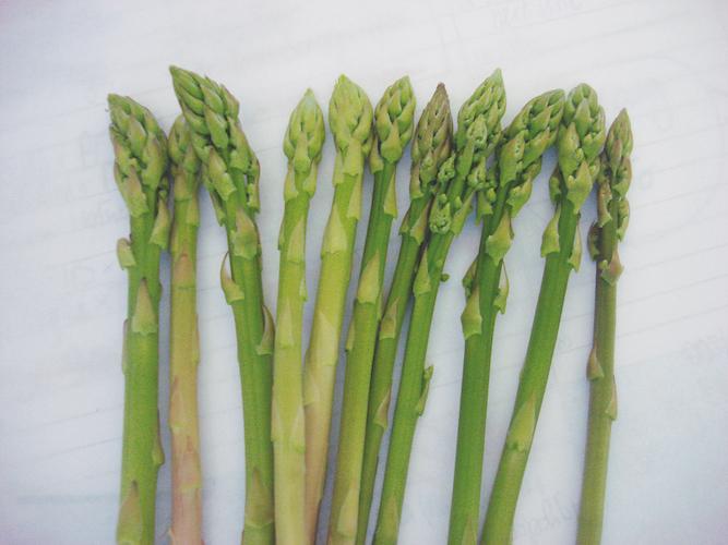 asparago-asparagi-fonte-geoplant-20210211