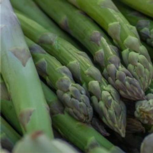 asparago-fonte-unimer