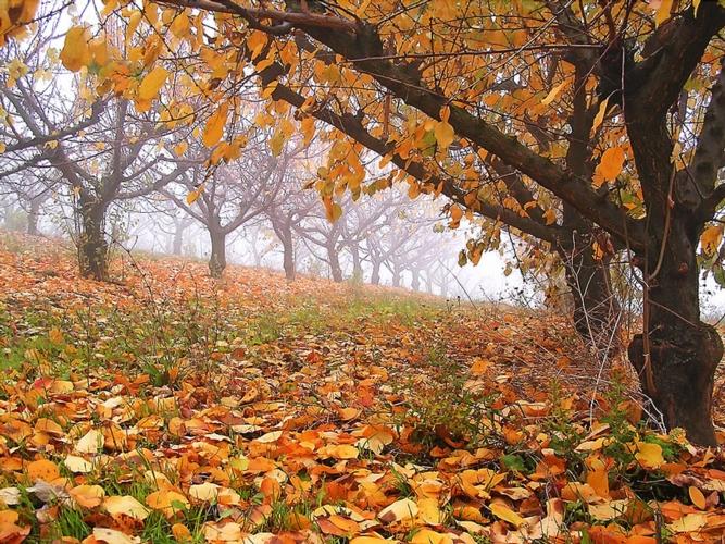 autunno-foglie-nebbia-matteo-battaglia.jpg