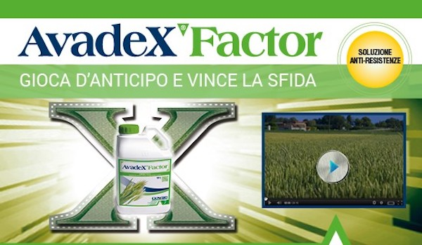 avadex-factor-fonte-gowan1