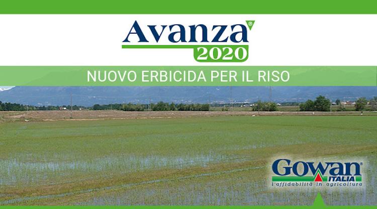 avanza-erbicida-riso-2020-luglio-fonte-gowan.jpg