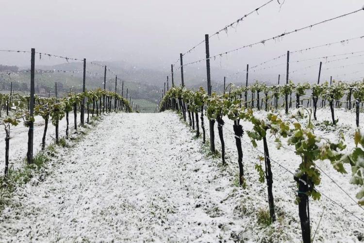 az-agr-reggiana-viticoltura-750