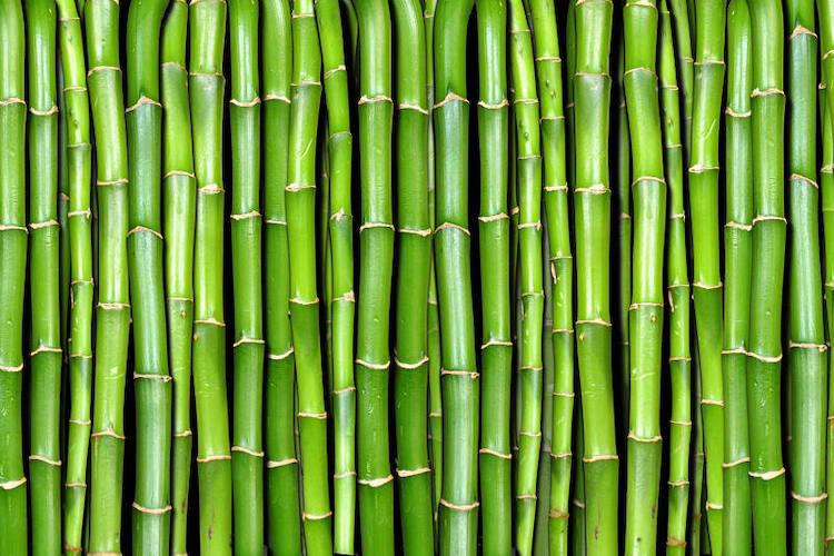bamboo-fonte-collegio-periti-agrari-e-peritiagrari-laureati-romagna