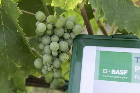basf-agricoltour-viticoltura-1