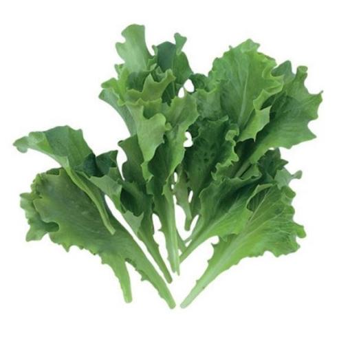batdark-lattughino-baby-leaf-fonte-enza-zaden