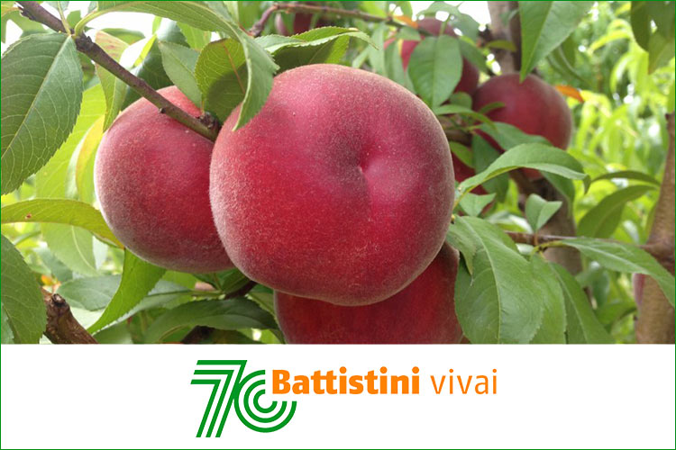 battistini-vivaio-logo-nuovo-70anni-bybattistini-750x500