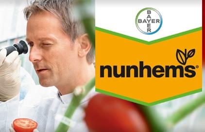 bayer-crop-science-nunhems-lattuga-primaverile