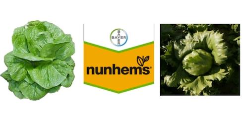 bayer-nunhems-insalate