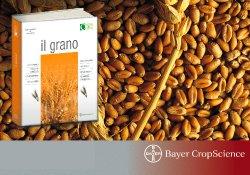 bayer_cropscience_grano_hussarmaxx