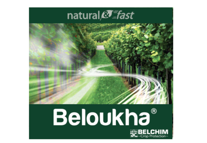 belchim-beloukha.png