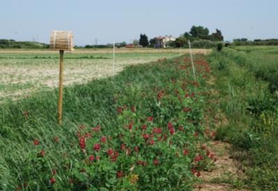 biodiversita-agricoltura-nest-trapping-trappola.jpg