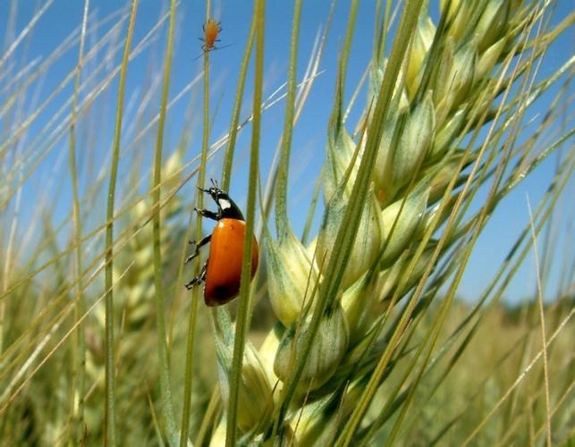 biodiversita-fonte-assosementi