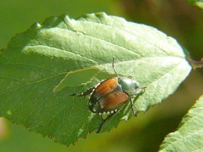 biodiversita-fonte-enea
