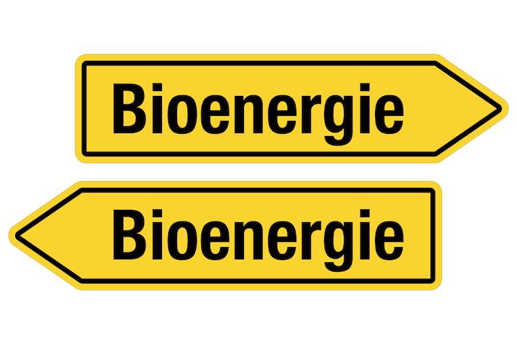 Bioenergia e biocarburanti, nuove frontiere per l'energia - Plantgest news sulle varietà di piante