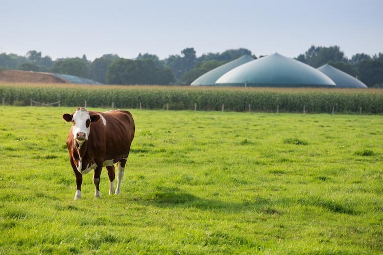 biogas-biocarburanti-energie-rinnovabili-by-fabian-faber-fotolia-750.jpeg