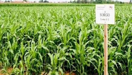 Biomasse agro energetiche, giornata divulgativa