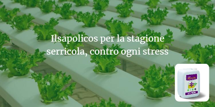 biostimolante-ilsapolicos-fertirrigazione-fonte-ilsa.png