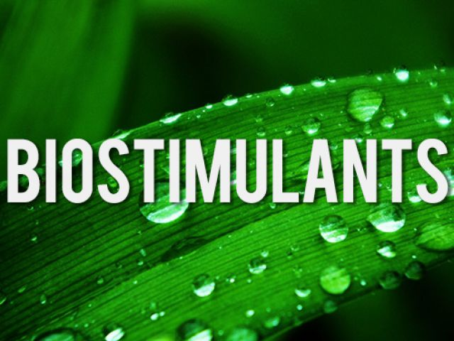 biostimolanti-fonte-fritegotto.jpg