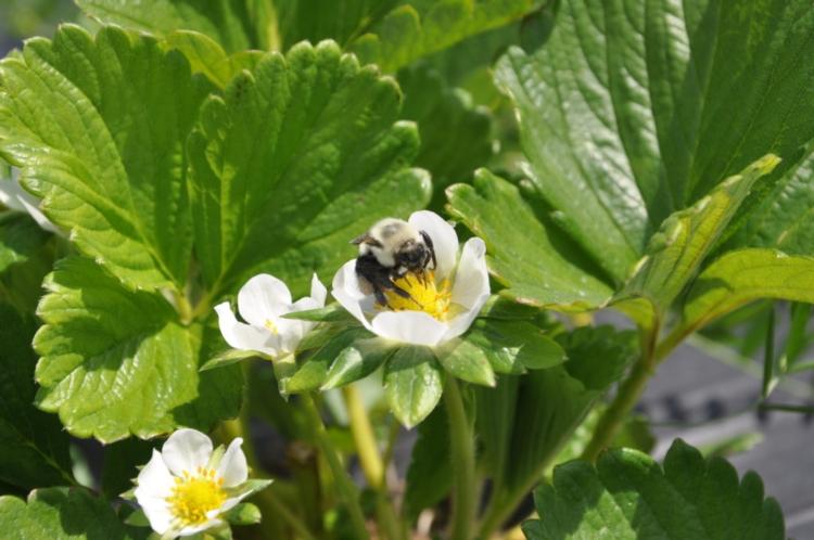 bombo-bee-vectoring-technology.jpg