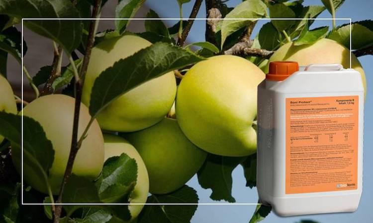 boni-protector-fungicida-biologico-fonte-manica