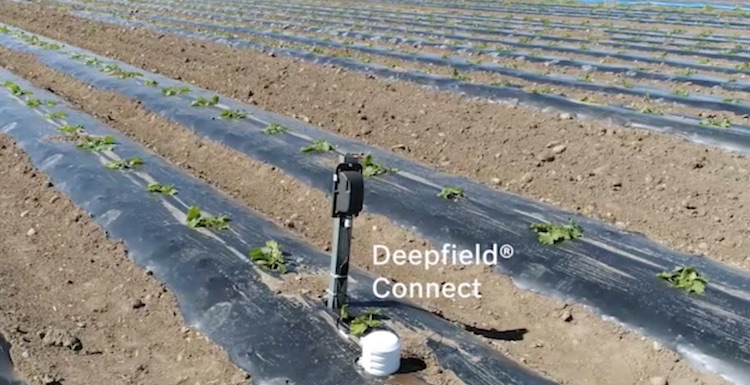 bosch-deepfield-connect-campo-fonte-video-barbara-righini-macfrut-2017