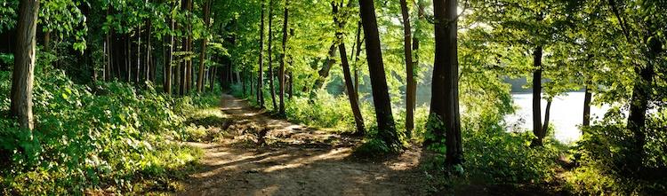 boschi-bosco-foreste-foresta-by-tarasylo-fotolia-750