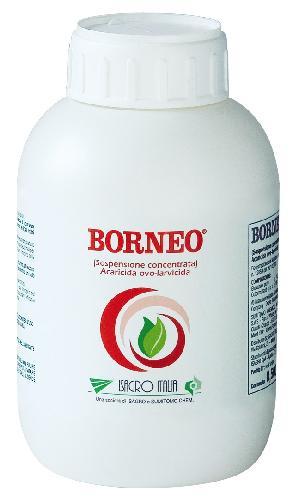 bott_Borneo_02_OK.jpg