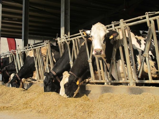 bovine-latte-intensivo-light-donatello-sandroni