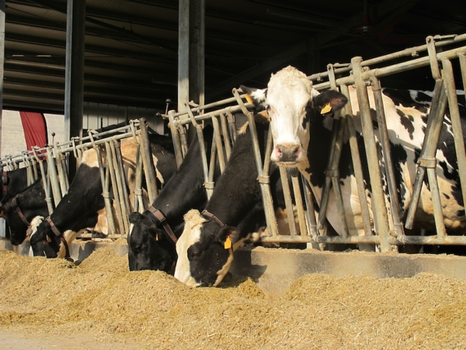 bovine-latte-intensivo-light-donatello-sandroni.jpg