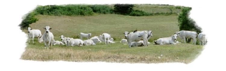 bovini-razza-romagnola-fonte-sito-araer