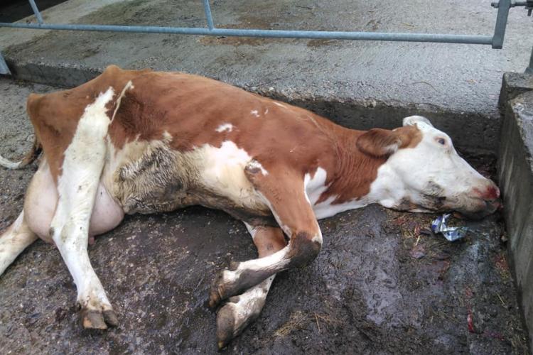 bovino-morto-littering-jean-philippona-facebook