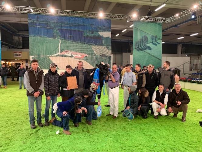 bovino-premi-mostra-bovini-fiera-fazi-montichiari-feb-2019-fonte-matteo-bernardelli