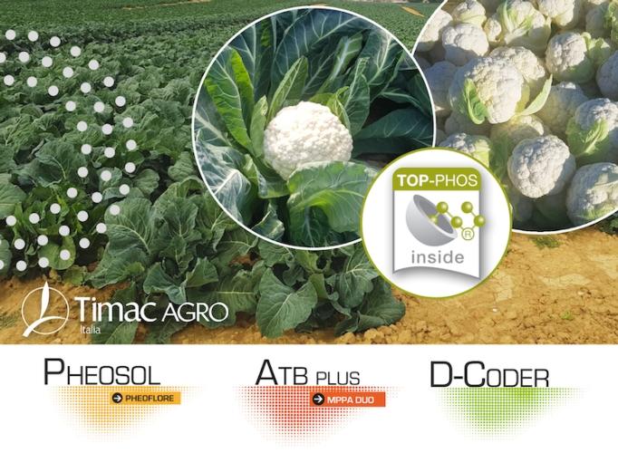 brassiche-linea-nutrizione-fonte-timac.jpg
