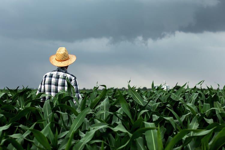 Climate change e stress abiotici, come affrontarli e superarli efficacemente - le news di Fertilgest sui fertilizzanti