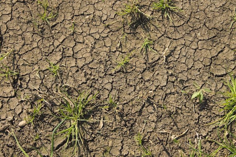 cambiamenti-climatici-siccita-by-donaldrigo-fotolia-7501