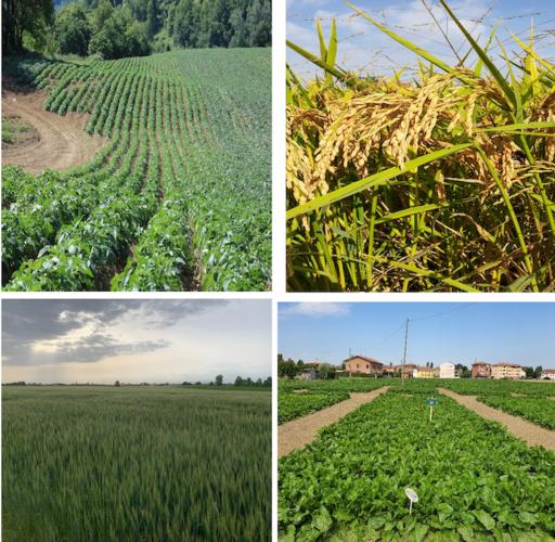 Cerefol: azoto, zolfo e magnesio per piante sempre giovani - le news di Fertilgest sui fertilizzanti