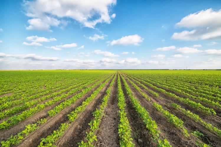 campo-agricolo-agricoltura-colture-by-sondem-fotolia-750.jpeg
