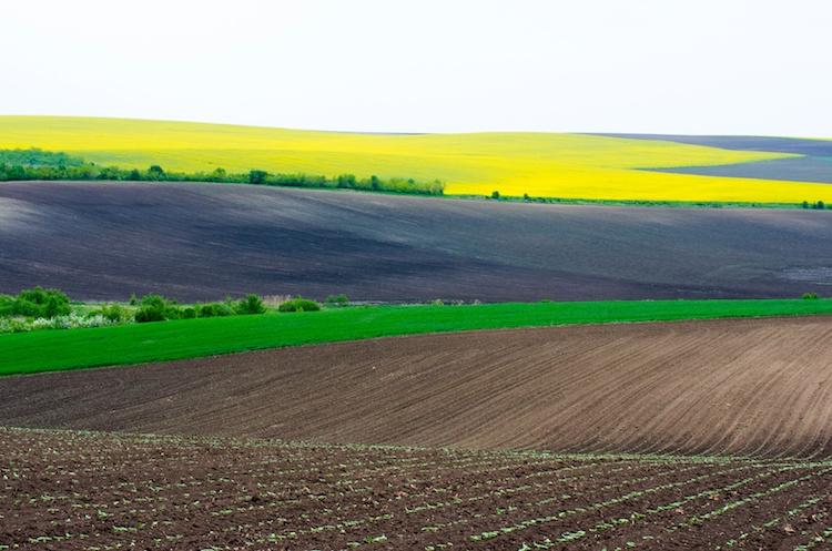 campo-agricoltura-colza-bioenergie-deyana-72-fotolia-750