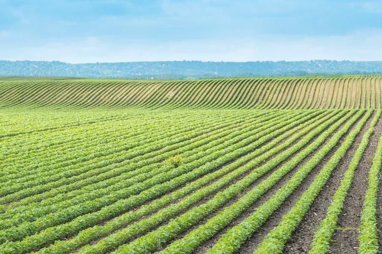 campo-agricoltura-dusan-kostic-fotolia-750x500.jpg