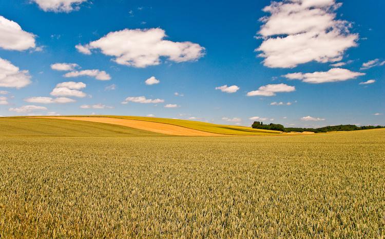 campo-agricoltura-paesaggio-by-olivier-poncelet-adobe-stock-750x466